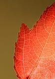 Orange Blatt-Nahaufnahme Stockbilder