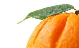 Orange, Blatt, waterdrops Stockfoto