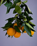Orange Block, grauer Hintergrund lizenzfreie stockfotografie