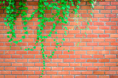 Orange block wall. Royalty Free Stock Images