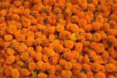 Orange blom- bakgrund av ringblommor Royaltyfria Bilder