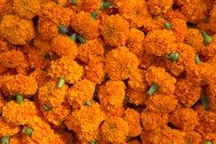 Orange blom- bakgrund av ringblommor Royaltyfri Foto