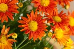 Orange blomma Royaltyfri Bild