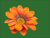 Orange blomma Arkivfoto