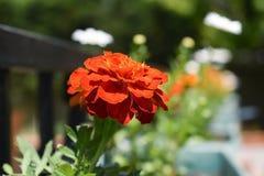 Orange blomma close upp specificera arkivfoto