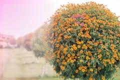 Orange blomma för bakgrund royaltyfri bild