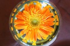 Orange blomma i exponeringsglas Arkivfoto
