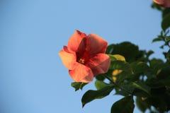 Orange blomma i luften Arkivfoton
