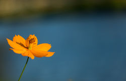 Orange blomma i trädgård Arkivfoto