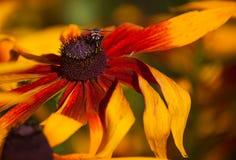 Orange blomma Makro fotografering för bildbyråer
