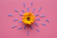 Orange blomma och blåa kronblad Arkivbilder