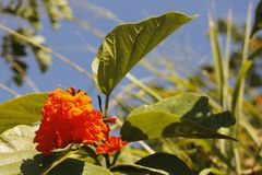 Orange blomma och grönt och blått royaltyfri bild