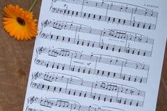 Orange blomma på den wood tabellen Bakgrund av musikanmärkningar Top beskådar Arkivbilder