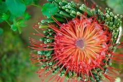 Orange blomma på grön bakgrund Arkivfoton