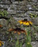 Orange blommastenvägg Fotografering för Bildbyråer
