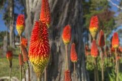 Orange blommor för vinter royaltyfri fotografi
