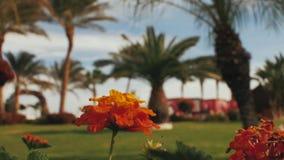 Orange blommor på en bakgrund av palmträd arkivfilmer