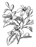 Orange blomning stock illustrationer