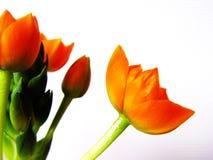 orange blomningar 1 Arkivbild