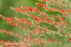 Orange blomningar för jordklotblomma Royaltyfria Foton