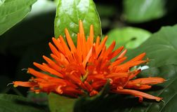 Orange bloom macro stock image