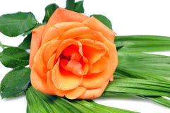 Free Orange Blooming Flower Stock Photo - 11721190