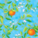 Orange blooming royalty free illustration