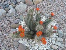 Orange Blooms Stock Photo