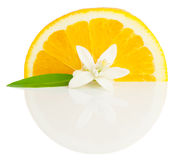 Orange  and  blossom. Orange, flower and slice with  reflection  on a white background Royalty Free Stock Images