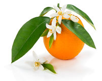 Orange with blossom and leaves Royalty Free Stock Image