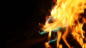 Orange and blue flames of fire stock video footage