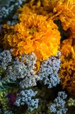 Orange and blue flowers in the bouquet closeup stock photos