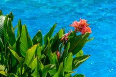 Orange Blume über Swimmingpool Stockfotografie