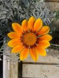 Orange Blume 2 Stockfoto