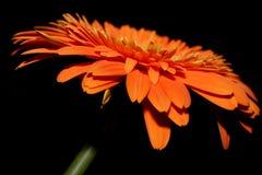 Orange Blume Lizenzfreies Stockbild