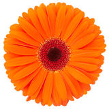 Orange Blume Stockfotos