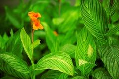 Orange Blume Stockfotografie
