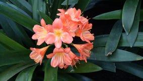 Orange Blume Stockfoto