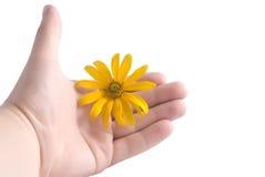 Orange Blume auf einer Hand Stockfoto