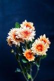 Orange Blume auf schwarzem Hintergrund Stockbilder