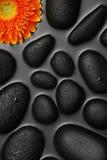 Orange Blume auf schwarzen Felsen Stockfotos