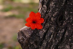 Orange Blume blackground Lizenzfreies Stockbild