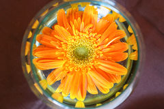 Orange Blume im Glas Stockfoto