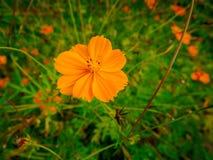 Orange Blume im Herbst lizenzfreie stockbilder