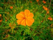 Orange Blume im Herbst stockfotos