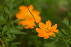 Orange Blume am sideroad Stockbild