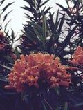 Orange Blumen über sonnigem Tel Aviv, Israel stockfoto