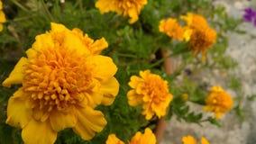 Orange Blumen lizenzfreie stockfotos