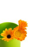 Orange Blumen Stockbild
