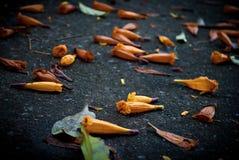 Orange Blumen auf konkretem Hintergrund Stockfoto